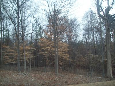 bare woods
