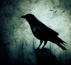 The Crow by Oana Stoian, (c) 2010