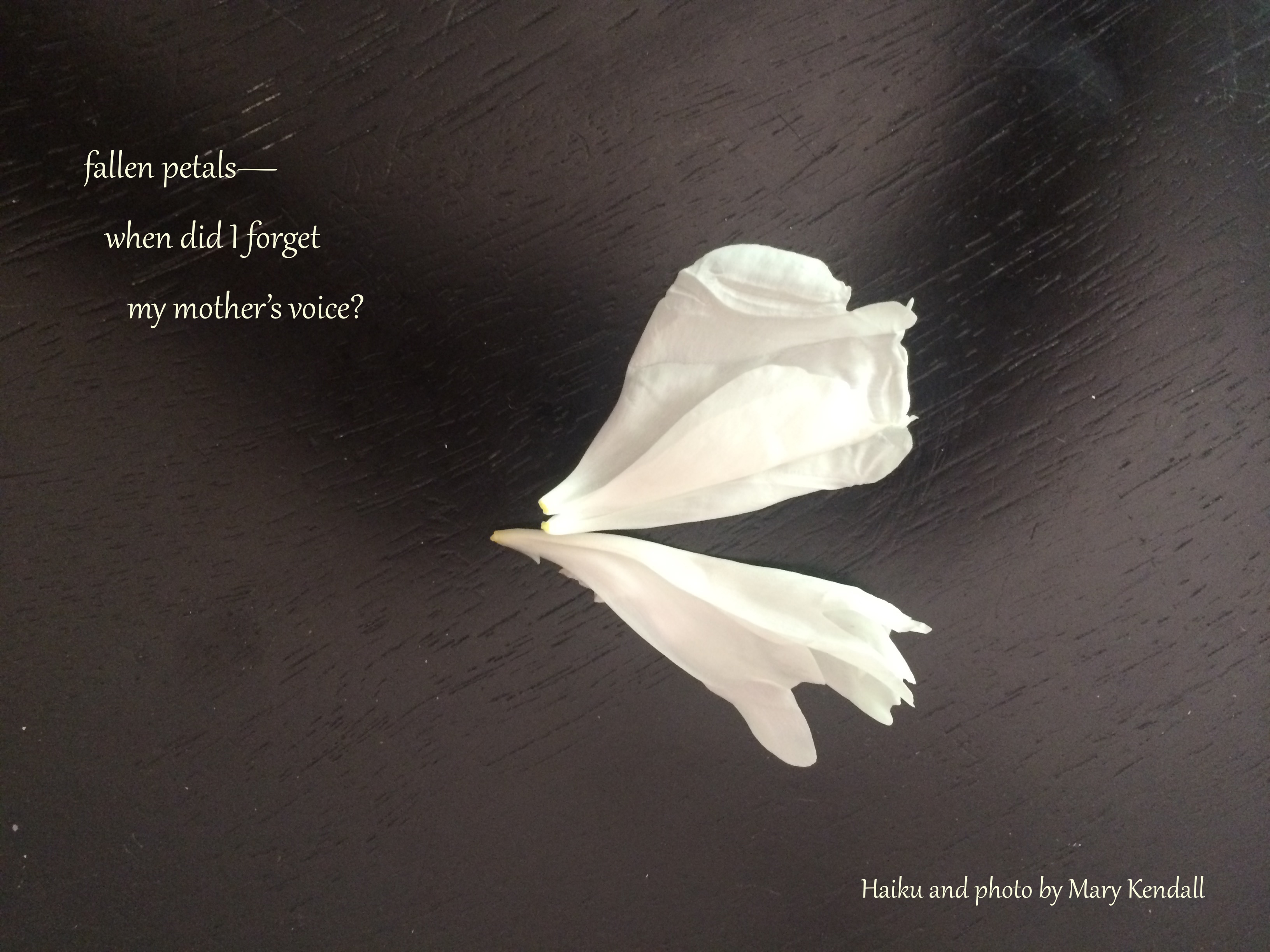 Flower poem a poet in time my mothers voice haiga mightylinksfo