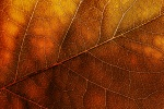 leaves_texture4982