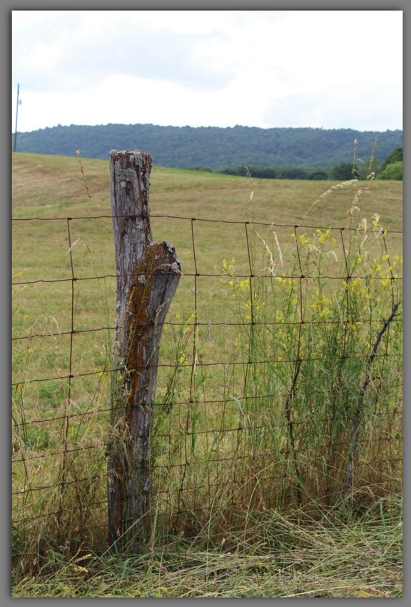 Fence ~ Photograph by Randy Baker (c) 2015