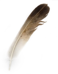 bird-feather-13486506267nW