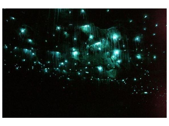 glowworms 3