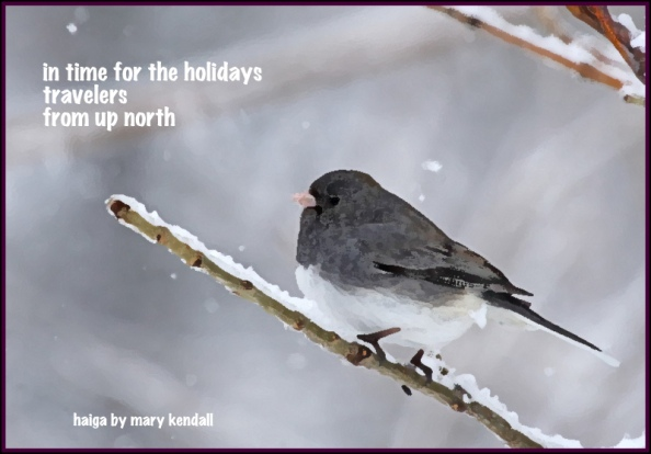 Kendall Holiday Junco 1