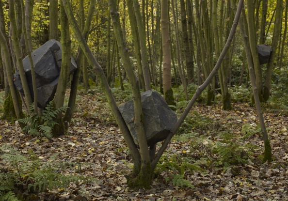 Stone Coppice by Andy Goldsworthy