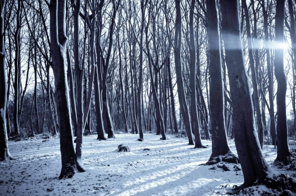 snow forest 1