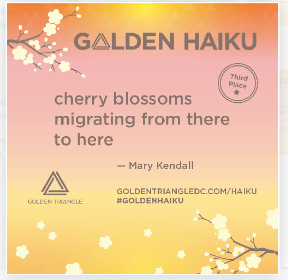 Golden Haiku Third Place Winner