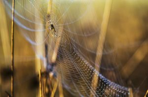 orb weaver Robert Potts:Getty Images
